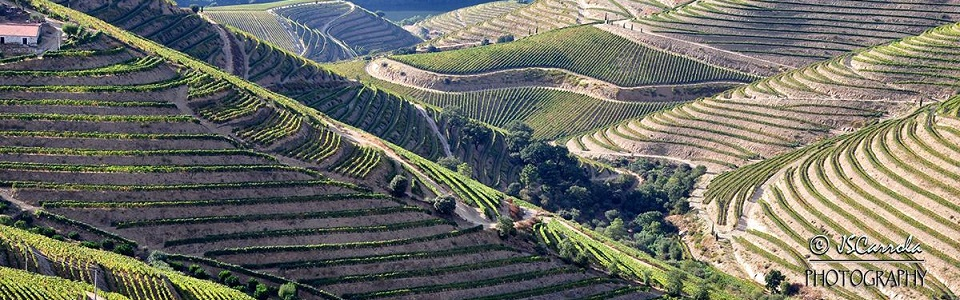 Vineyard Terraces in Douro Region